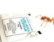 Борная кислота в борьбе с муравьями. Рецепты и способы применения