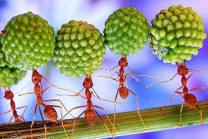 муравьи в природе