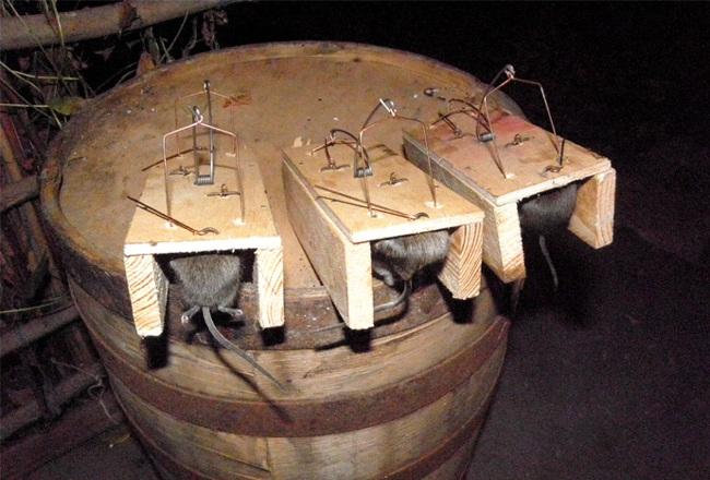 Мышеловки для крыс