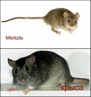 Разница в размерах