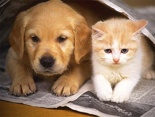 Самые популярные домашние животные - коты и собаки - редко подвергаются укусам