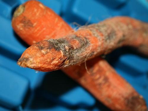 Попадание грибков в организм может вызвать ряд неприятных заболеваний