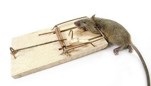 Мышеловка для крысы