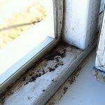 Плесень на пластиковых окнах: как избавиться от неё навсегда
