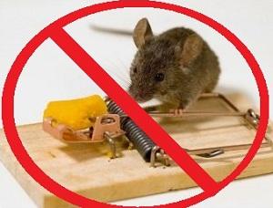 Различные средства от крыс