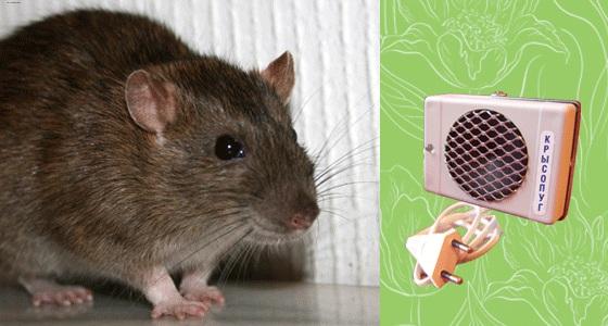 ультразвуковые отпугиватели мышей тайфун отзывы
