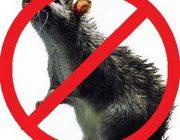 Дом без грызунов: лучшие методы борьбы и профилактики от мышей и крыс