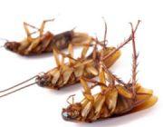 Эффективные и часто используемые народные средства для уничтожения тараканов