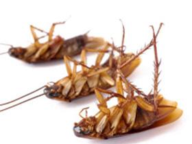 Придерживайтесь данных советов для изгнания паразитов