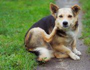 Принципы выбора антиблошиного ошейника для собак