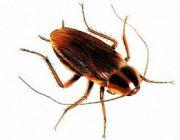 Как можно расшифровать сон про тараканов