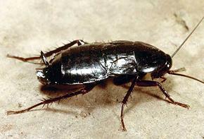 Куда делись тараканы