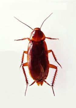 как изгнать паразитов из организма