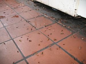 Избавляемся от тараканов в квартире раз и навсегда