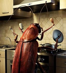 Тараканы не выносят низких и высоких температур
