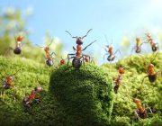 Как бороться с муравьями в огороде или на даче