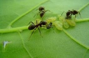 Способы борьбы с муравьями на дачном участке