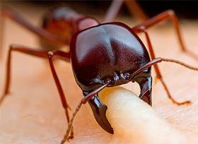 Сны про муравьев