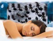 Муравьи во сне: толкование