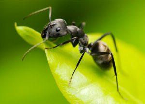 Спирт - достаточно эффективное средство против насекомых