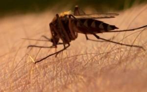 Снимаем зуд от укуса комара