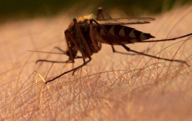 как убрать паразитов из организма