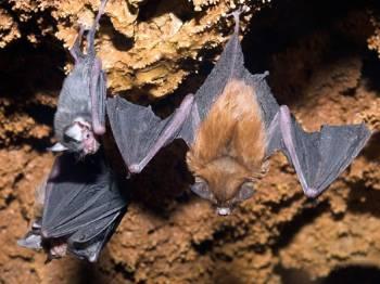 летучие мыши висят в пещере
