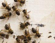 Как эффективно избавиться от пчел?