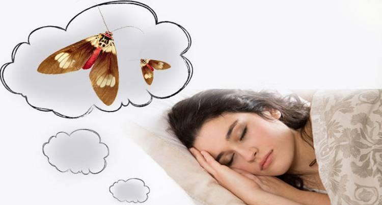Видеть во сне моль к чему