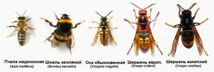 фото жалящих насекомых