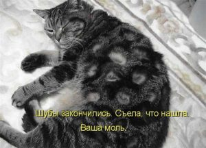 Поеденный молью кот