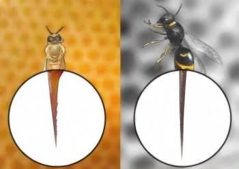 жало осы и пчелы