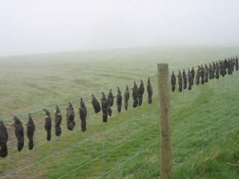 забор с кротами