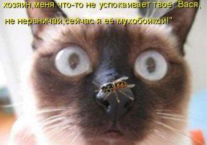 Оса на носу у кота