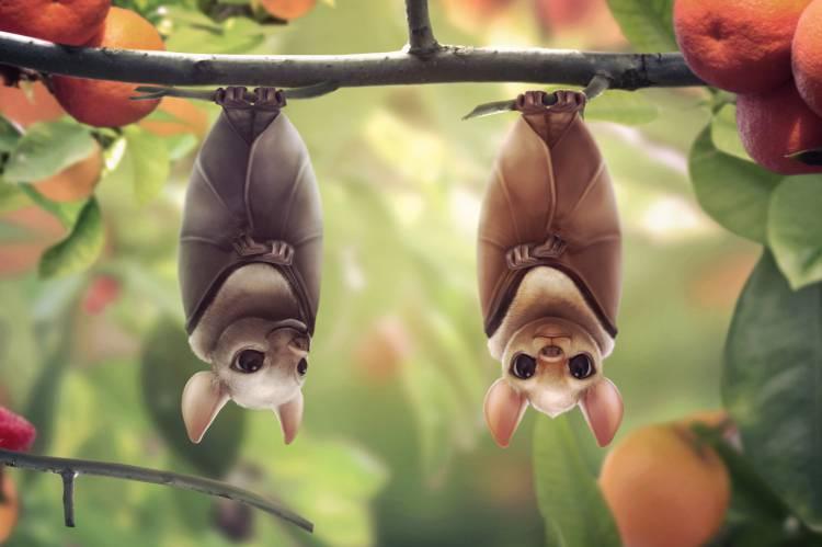 летучие мыши на мандарине