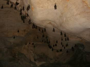 много летучих мышей в пещере