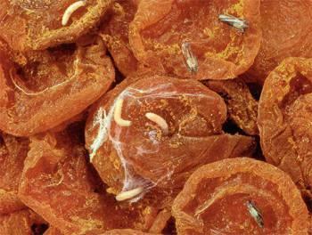 моль в сушеных фруктах