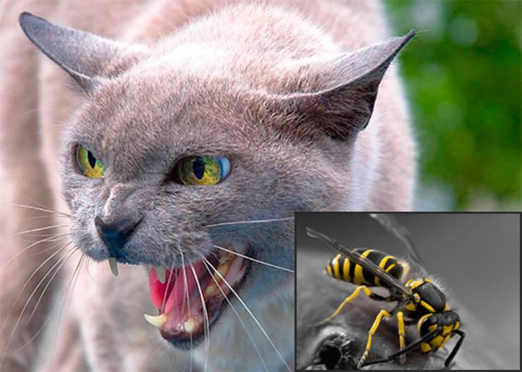 оса укусила кота
