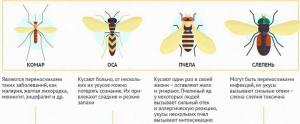 кусающие насекомые