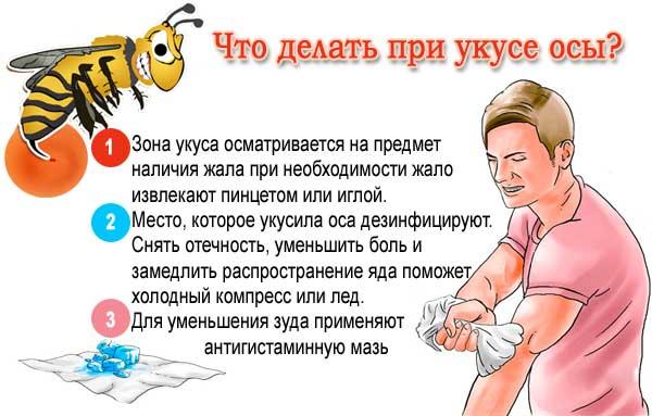 При укус осы что делать в домашних условиях
