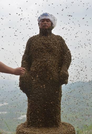 пчелы облепили человека