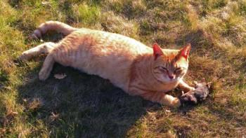 кот поймал крота