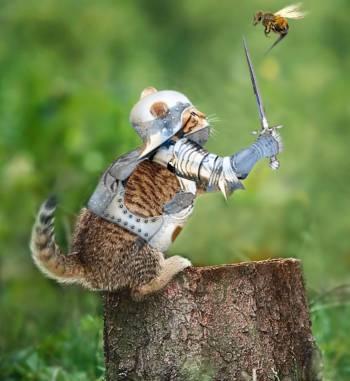 кот сражается с пчелой