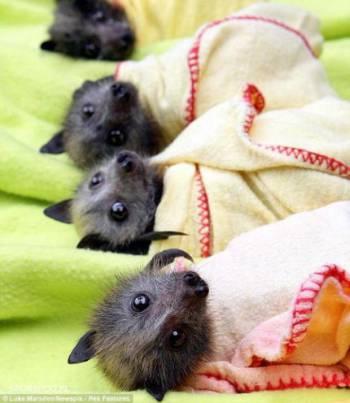 летучие мышки в пелёнках