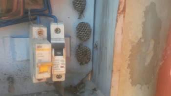 осиное гнездо рядом с электро автоматом