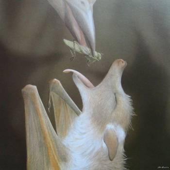 птица кормит летучую мышь