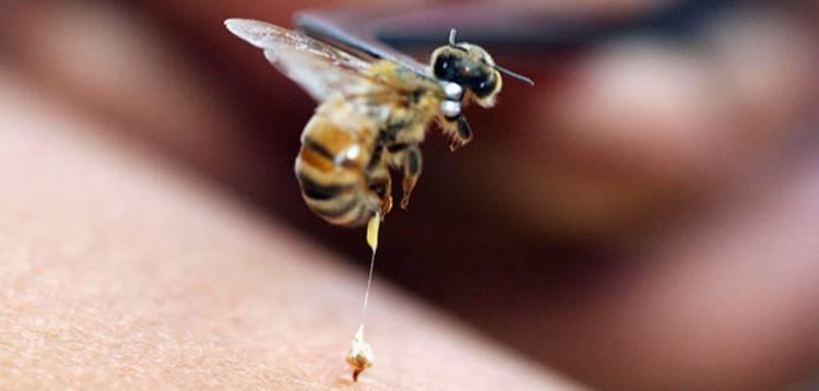 пчела улетает оставляя жало