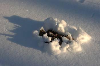 следы крота зимой